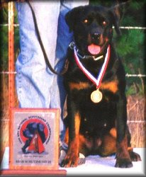 Jenecks Zara, working rottweilers, rottweiler training, rottweiler trainers