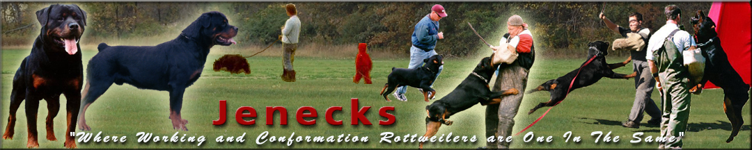 Jeneck's Rottweilers, Where working and conformation Rottweilers are on in the same.
